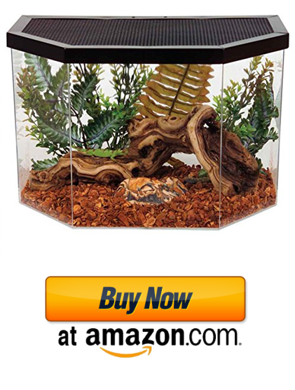 Best iguana habitats for sale can be found here.