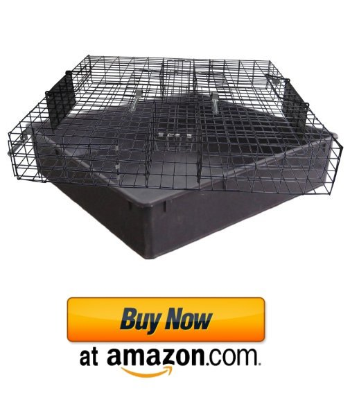 Best live trap for squirrels.