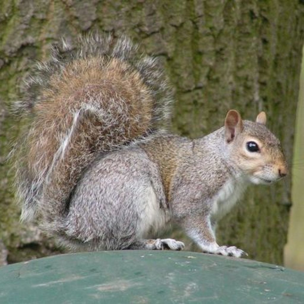 how to get rid of squirrels in backyard