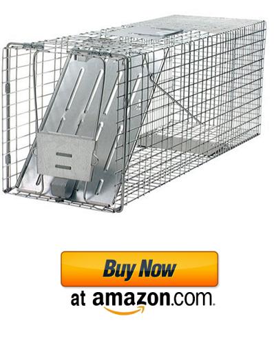 Professional raccoon trap.