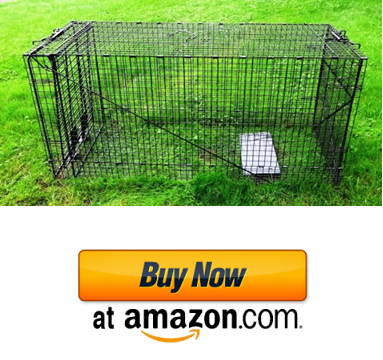 Best Possum Trap in 2019 - How To Get Rid of Possums - Reviews